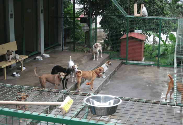 Rescued and sheltered doggies at the Philippines Animal Welfare Society (PAWS), Ortigas, Manila, Philippines